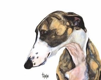 Greyhound, Greyhouns, Galgo, Galgo Espagñol, Whippet, Lurcher, Sighthound, Wolfhound, Iggy ,Art print size 8x12 inch