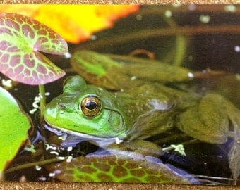 Zen Frog Photo Hemp Card