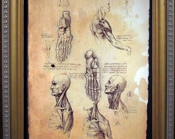 Leonardo Da Vinci Anatomy Art Print- Vintage Art Print on Tea Stained Paper