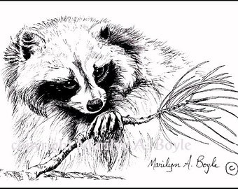 PRINT - INK DRAWING - Racoon, wildlife, black and white, ink, reproduction, Canada, 5 x 7 inches