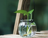 Pumpkin Shape Glass Hanging Container -- for water plants, succulents, dried flowers, tea light holder