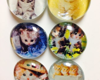 Cat glass magnets, kitten magnets, cute cat glass magnets. Set of 6 glass magnets for home office school