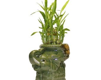 Two Tiered Lucky Bamboo Arrangement Elephant Favor