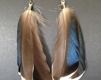 Mallard Duck Feather Earrings