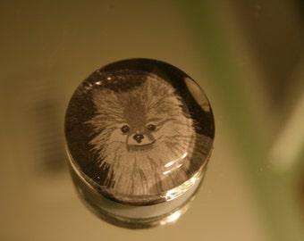 Unique Pomeranian Glass Magnet