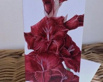 Gladiolus  'Black Star'  oblong art card - blank inside
