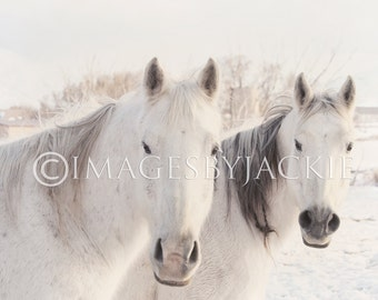 Two White Horses Fine Art Digital Photograph