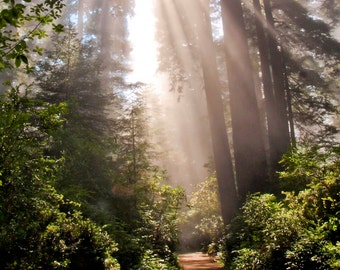 The Redwood National Park in Northern California