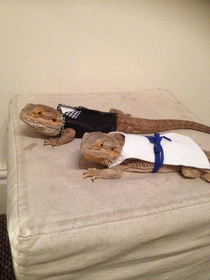 how to make bearded dragon costumes