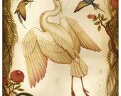 White Heron  - Limited Edition Print - Natural History Print Birds - Nature art