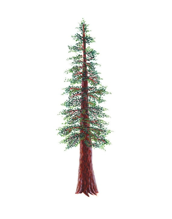 Redwood Tree Art Print - 11 x 14 inchesRedwood Tree Painting