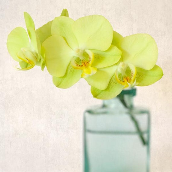 Orchid Photo, Flower Print, Floral Photo, Orchid Photograph, Still Life Photography Print , Orchid Art, Flower Photograph, Wall Decor