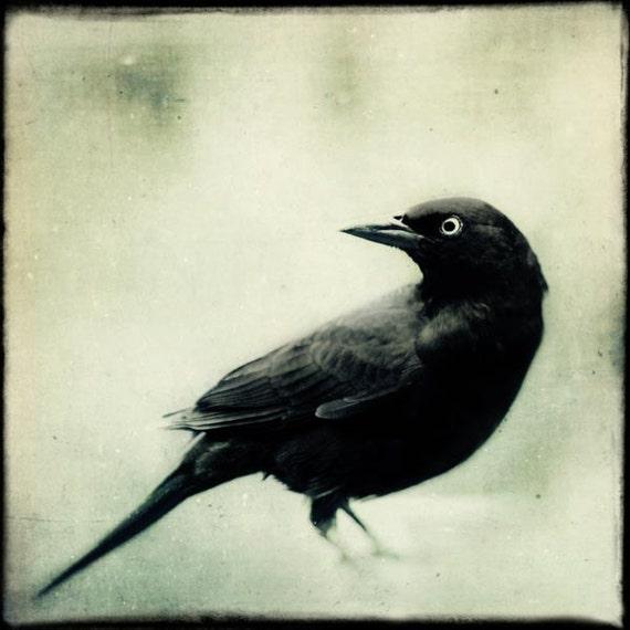 Spooky Gothic Black and White Bird Print, Fine Art Photography Bird, Crow, Raven, Blackbird, Halloween Art, Grackle No. 2