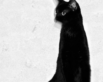Abstract Cat Photos Animal Photography Minimalist Cat Wall Art Print. Black and White Cat Home Decor, 8x10, 5x7 matted to 8x10 In Stock