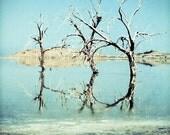 Three Trees Photography 8x10, California Desert Photo, Slab City, Salton Sea Photography, Office Art