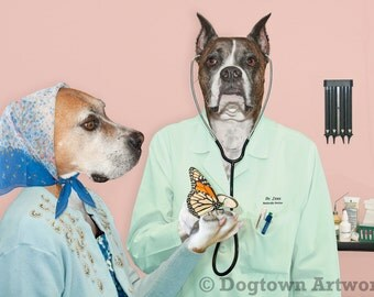 Butterfly Doctor, large original photograph of Boxer dog doctor examining a monarch butterfly with stethoscope