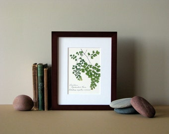 "Pressed fern print, 8"" x 10"" matted, Southern Maidenhair fern, woodland botanical, no. 026"