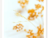 Without Yellow And Without Orange - Nature Photography - Macro Photograph - Fine Art Color Photography