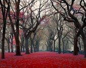 Central Park Photography, New York Print, red black gray decor, New York City Art, NYC Art, fog art