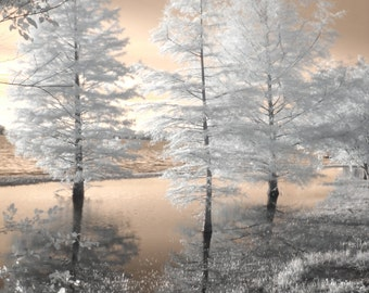 Tree photography, infrared photography, pantone rose quartz, color of the year, 2016, landscape