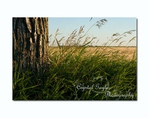 Country Decor, Wheat Photography Print, Wild Grasses, Country Chic, Wheat Field, Unframed, 8x10 or 11x14, Gift for Farmers Wife, Rancher