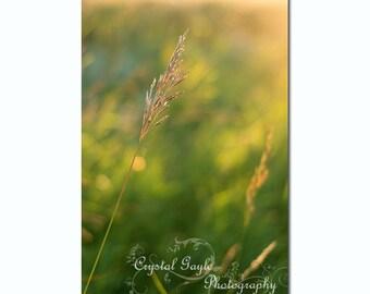 Prairie Sunrise Photography, Rustic Home Decor, Grass Green, Golden Yellow, Unframed Entrance Print, Farmhouse Office Wall Decoration