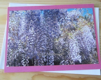 Wisteria Blank Greeting Card Photography