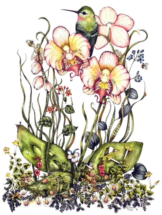 Watercolor and Ink Painting Print- Hummingbird and Orchid