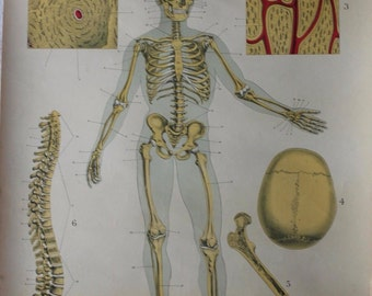 Victorian anatomy charts 1892 full color set of 8 extra large in book form