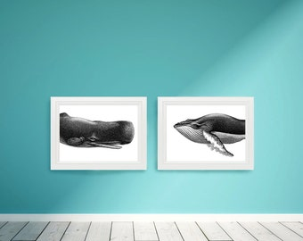 Large Whale Portrait Nautical Vintage Style Art Print Set Beach House Black and White Grey