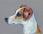 Dog drawing - Portrait of a Jack Russell Terrier drawn using coloured pencils on tinted paper.