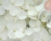 Hydrangeas and Cherries, Flowers, Fruit, Vintage/Nostalgic/Shabby chic