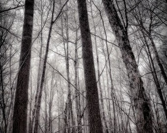 Winter Forest, Dark Woods, Mysterious Forest, Mysterious Woods, Surreal, Moody, In the Deep Dark Forest, Deep in the Woods