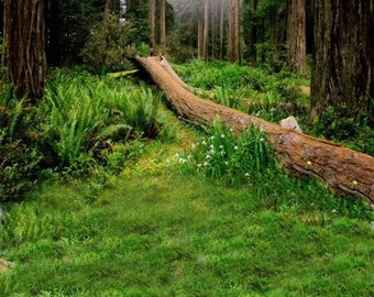 Forest Meadow Photography Backdrop