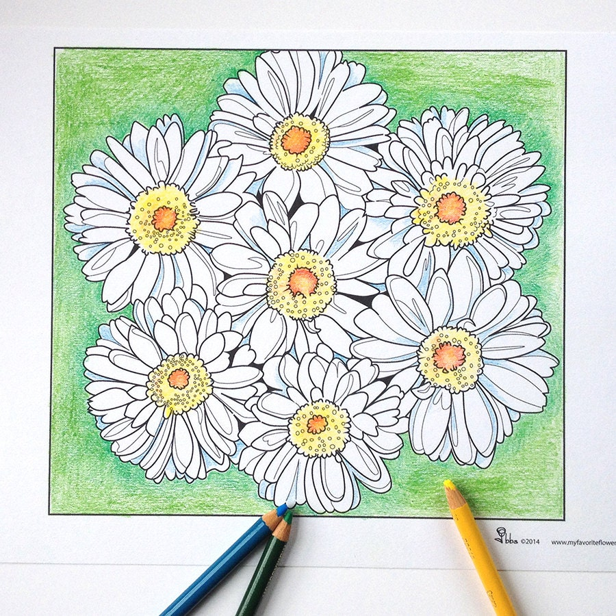 Color Daisies: Daisy Coloring Page Daisies Coloring Sheet Instant Download
