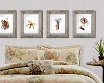 set of 4 Beach Decor Wall Hanging Cephalopod Octopus Squid Art Prints Sea Creature neutral Nautical Beach bedroom Decor GnosisPictureArchive