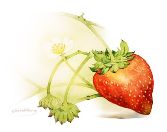 Watercolor Painting - Strawberry Painting - Watercolor Strawberry - 5 by 7 print - Archival Print, Minimalist, Home Decor, Fruit Art