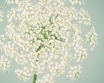 Botanical Print, Flower Photography, Wall Art, Nature Photography, Fine Art Photograph, Flower Photo, Queen Anne's Lace, Aqua & Ivory Art