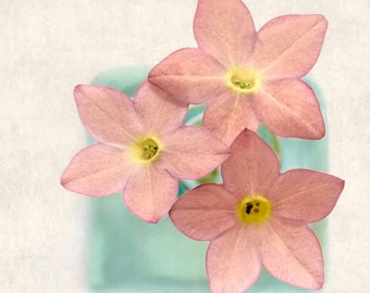 Flower Photograph, Fine Art Photography, Floral Art Print, Botanical Art Print, Spring Flower Photography Print