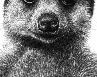 Meerkat Giclee Fine Art Print, Wall Art, Animal Art Gift, Black and White Picture, 5x7 Print