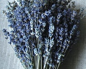 Brides Wedding Bouquet of English Lavender