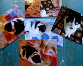 "5 Postcards ""Cat and Quilts"" Series"