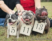 SAVE THE DATE - Set of 3 - Pet Signs