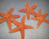 Starfish,  starfish accessories ,starfish hair,mermaid hair,mermaid starfish, mermaid barrette,starfish barrette