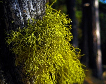 Mossy Green Lichen Woods Evergreen Fine Art Photography Oregon Mt Hood Forest Greeting Card BEAUTY in the DETAILS by Spinning Castle