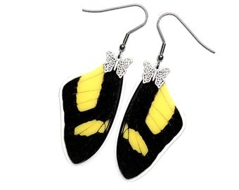 Real Butterfly Wing Earrings (Torquatus Forewing - E193)
