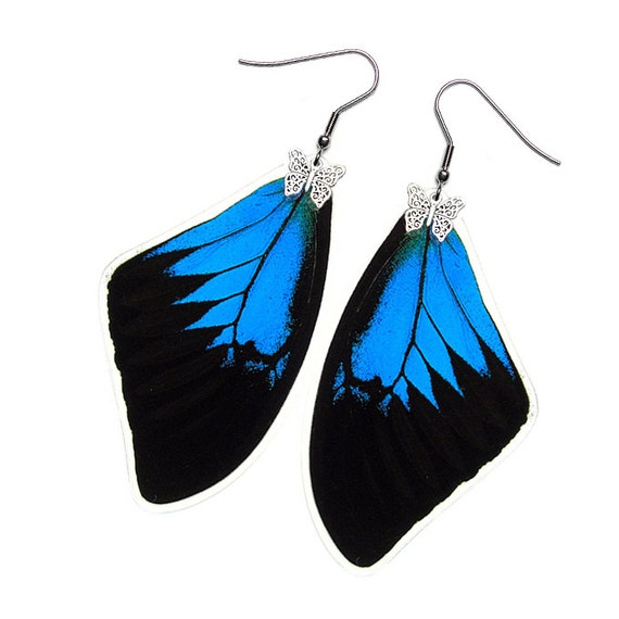 Real Butterfly Wing Earrings (Ulysses Forewing - E002)