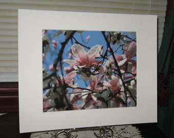 Matted, Blooming, Pink, Magnolia, Tree, Jeffersonville, Indiana Fine Art, Photograph, Print, Glossy OOAK