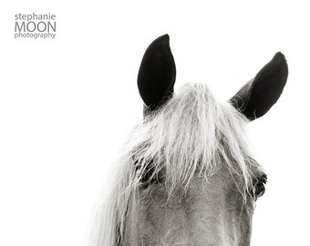 Horse Photography, Black and white horse photography, Funny Horse Picture, fine art equine photography, 8x10