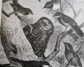 1887 Sparrows and Owl Antique engraving, Natural History bird Print, wall art